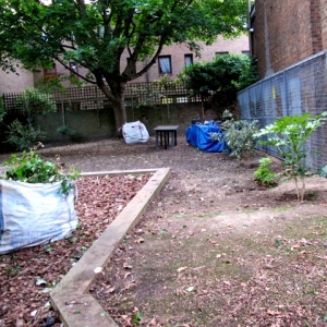 The garden cleared of rubbish and overgrown plants